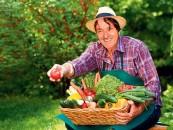 BREGOVIĆEV HOBI: Uzgajam paradajz i krastavac u svom dvorištu