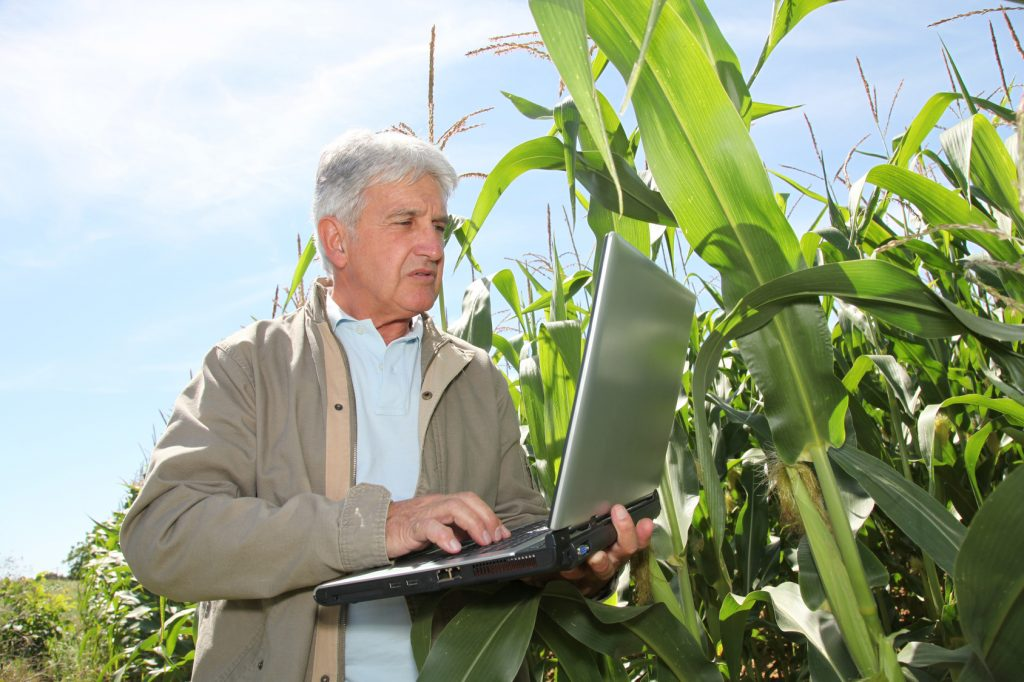 Agronomist in corn field with laptop computer