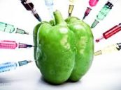 HSP AS: PREKO AGROKORA VLADA U HRVATSKU UVODI GMO HRANU
